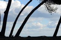 Tree by beach