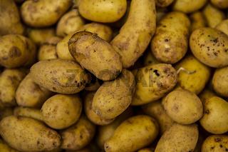 Exquisa Kartoffel