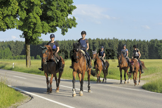 Reiter überqueren Straße / Horseback riders crossing a road