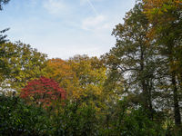 Autumn colors in the trees