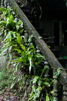 Ruins of ancient building hidden in jungles