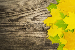 Autumn maple leaf on old wooden board