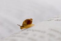A small snail moving over book chapter