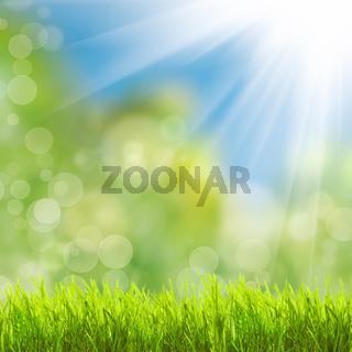 Green grass over sunlight