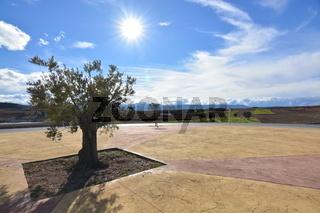 Paisaje de un olivo bajo en sol brillante