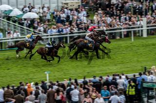 Chester Pferderennen