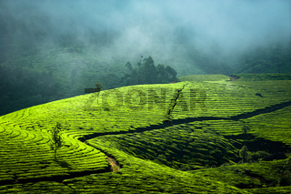 Sunrise at tea plantation. India, Munnar, Kerala