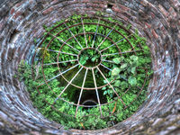 Plants growing in a well, HDR