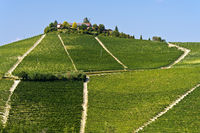 Vineyards near Treiso, region Piedmont, Italy