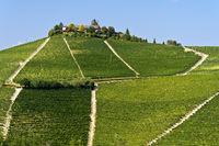 Vineyards near Treiso, region Piedmont, Italy