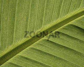 Pflanzenblatt Makro Hintergrund Struktur