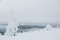 Finnish fairytale forest, Kittila, Finland