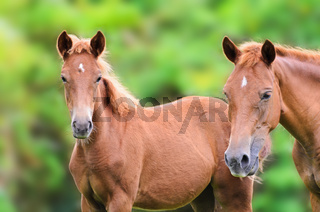 Close up brown horse looking
