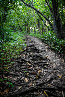 Hiking Trail in Maui Hawaii