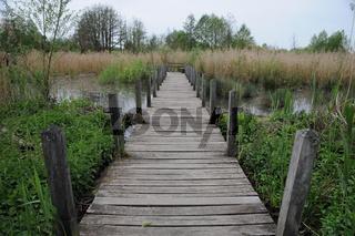 Holzsteg im Sumpf, Wooden foot bridge in swamp