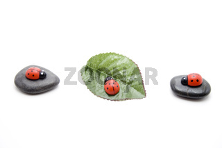 Käfer mit Pflanzenblatt