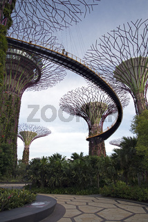 Supertrees, Gardens by the Bay, Singapur