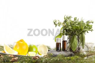 Zitrone Limette Kräuter und Nadelhölzer sowie Walnüsse