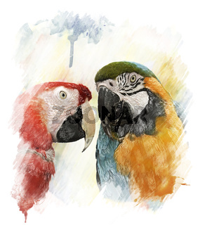 Watercolor Image Of  Parrots