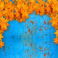 Bright orange autumn leaves on the background of rusty metal wall