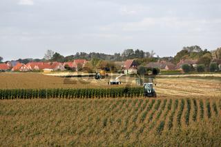 Maisernte in Ostfriesland