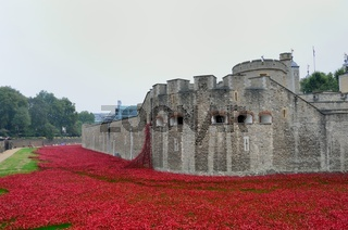 Rememberance poppies at tower