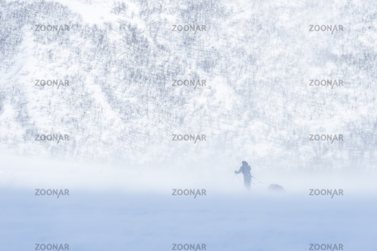 skier in snow drifting, Lapland, Sweden