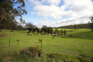 Rolling hills and cattle grazing Southern Highlands Australia