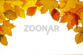 leaves in autumn on white background