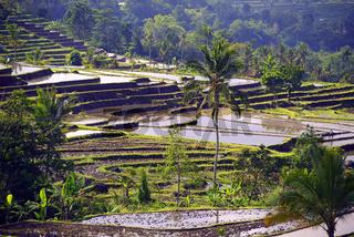 die berühmten Reisterassen von Jatiluwih, Bali, Indonesien