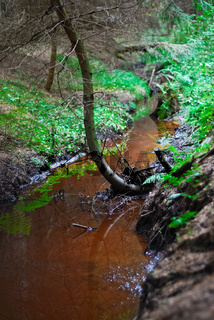 Kleiner Bach im Moor