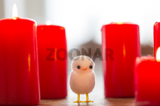 little white chicken between big red candles