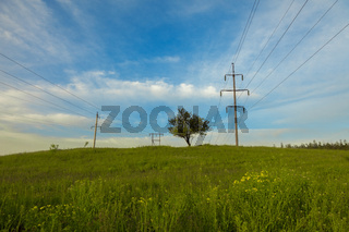 lonely tree among the high-voltage wires. landscape