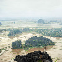 Panorama of the rice fields. Ninh Binh, Vietnam