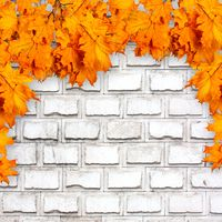 Bright orange autumn leaves on the background of an old brick wall