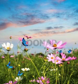 butterflies flying in the flowers