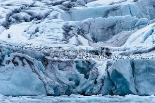 Gletscherfront des Samarinbreen, Spitzbergen