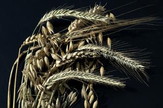 Getreidestrauss, Getreidesorten; Getreide
