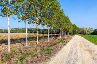 Trees along country road in Italy.