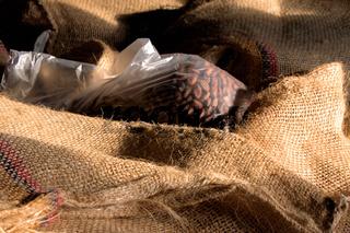 Kakaobohnen in Tüten und Jutesäcken