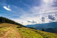 Amazing sunny landscape with pine tree highland forest at Carpathian mountains under blue sky. Ukraine destinations and travel background
