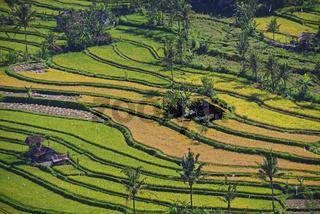riesige Reisfelder und Reisterassen in Zentralbali, Munduk, Bali