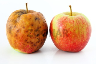 apple spoiled on white background Healthy and rotten apples