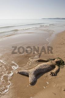 Naturkunst-am-Strand