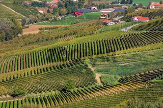 Autumnal vineyards in Piedmont, Northern Italy.