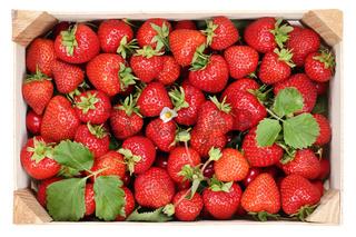 Erdbeeren Beeren Früchte in Holzkiste