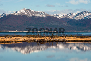 Autumn in Patagonia. Tierra del Fuego, Beagle Channel and Chilean territory, view from the Argentina side