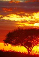 sunrise at Etosha National park, Namibia