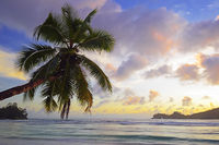 Überhängende Kokospalme bei Sonnenuntergang an der traumhaften B