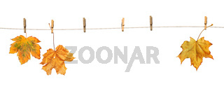 Maple leaves on clothespins with the word autumn